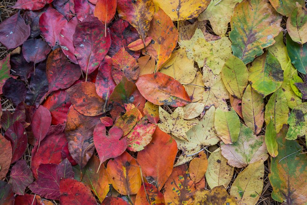 180825 Oak Mountain August Leaf Ombre IMG_3832 s