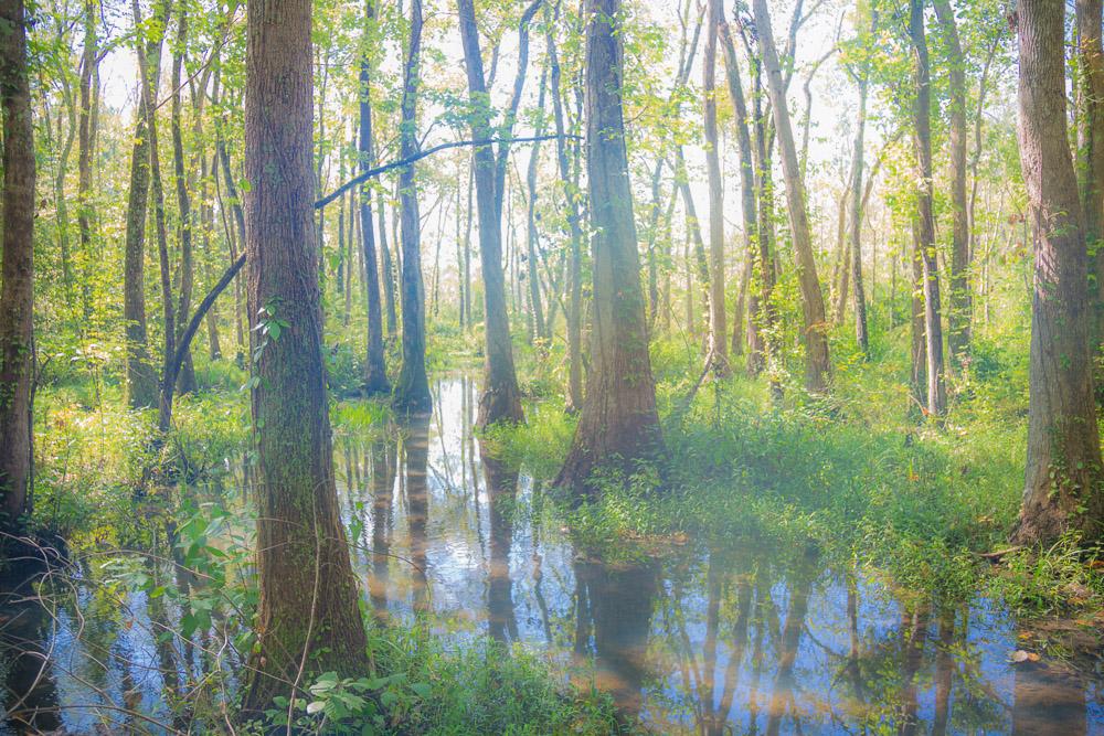 180914 Ebenezer Swamp IMG_4943 s