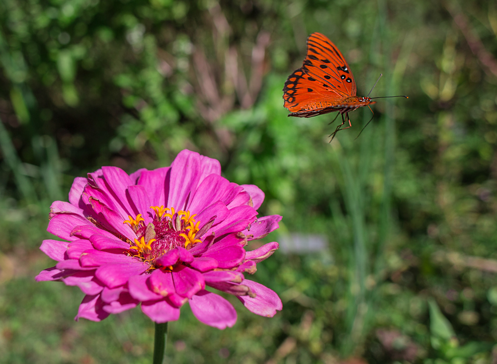 181003-Butterfly-Lunch-IMG_6203 s