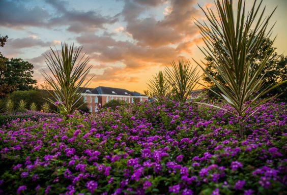 181006-Sunset-in-Auburn-IMG_6790-H s