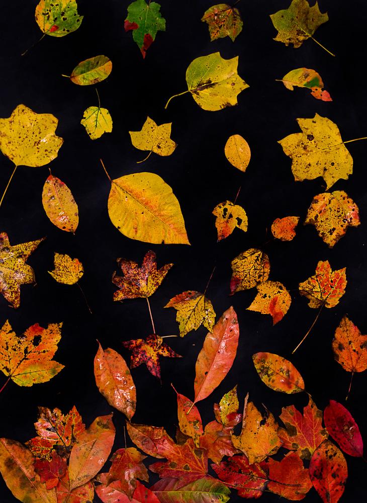 181027-Leaves-of-Dunnavant-Valley-IMG_8629 S
