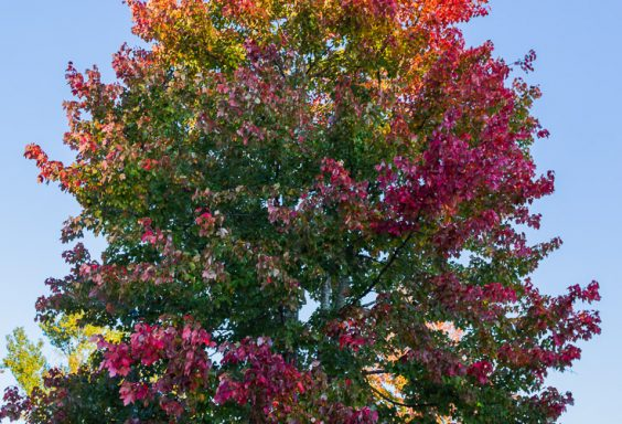 181028 Multicolored Tree in the Last Sunlight IMG_8766 S