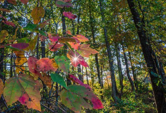 181029 Oak Mountain Sunset Through Leaf Filter IMG_9045 S