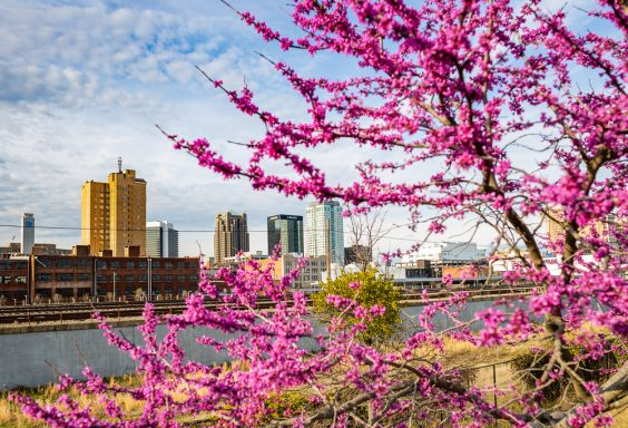 190312 Railroad Park Red Bud Trees and Sunset IMG_0549 s