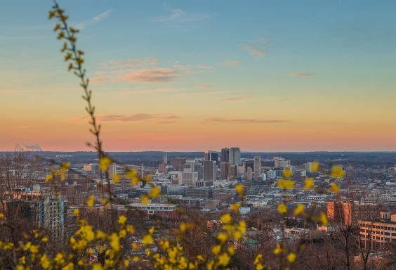 190110-birmingham-through-the-flowers-IMG_0827-30-24-canvas-ready-to-print S