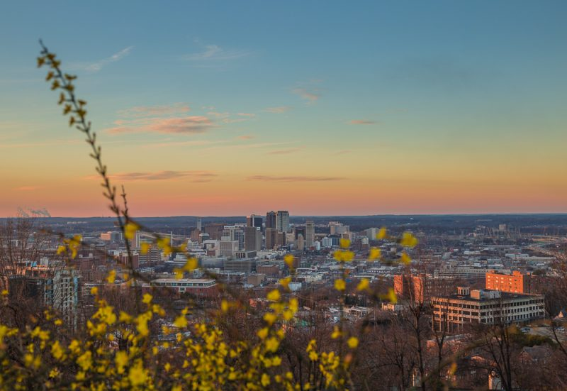 190110-birmingham-through-the-flowers-IMG_0828 S