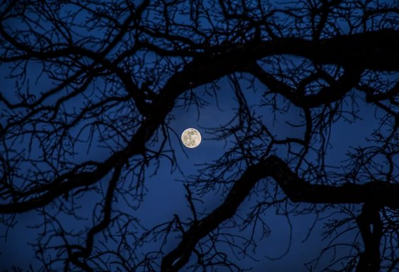 190119-Full-Moon-Through-the-Spooky-Tree-IMG_2124-H S