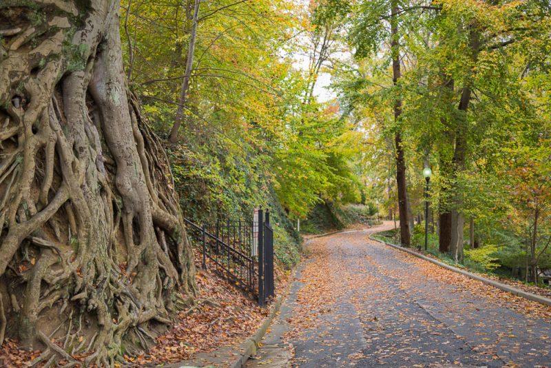 181115-swamp-rabbit-trail-IMG_1844 s