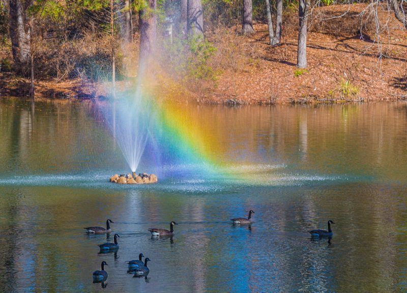 181218-rainbow-fountain-aldridge-gardens-IMG_9940 s