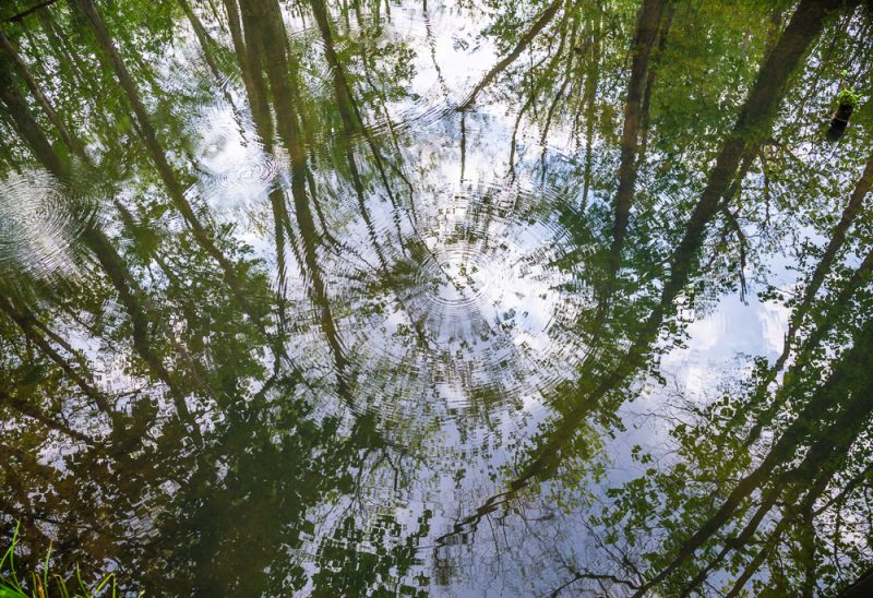 190413 ebenezer swamp IMG_9450 s