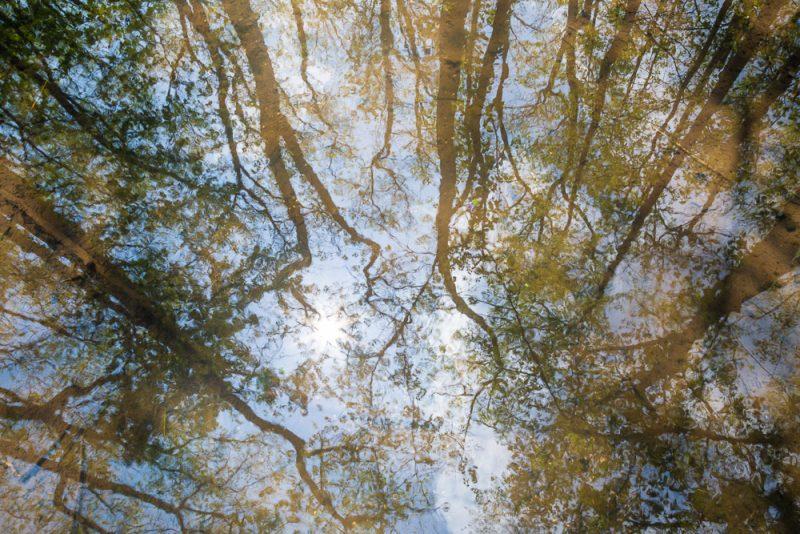 190413 ebenezer swamp IMG_9498 s