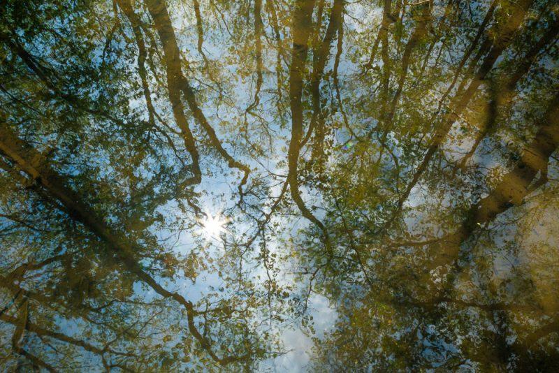190413 ebenezer swamp IMG_9507 s