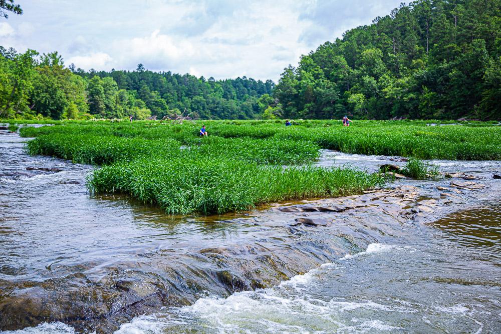 190612 Cahaba River NWR IMG_5748s