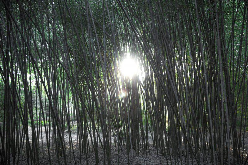 190807 bamboo garden botanical gardens IMG_1430s
