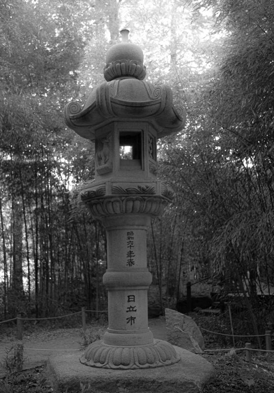 190807 bamboo garden botanical gardens IMG_1449s