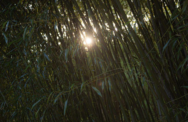 190807 bamboo garden botanical gardens IMG_1455s