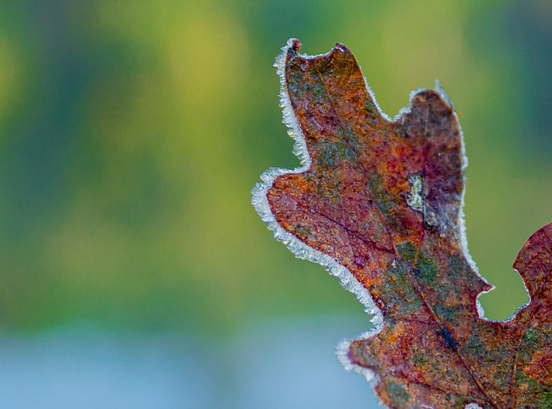 191102-fall-interrupted-IMG_0022 S