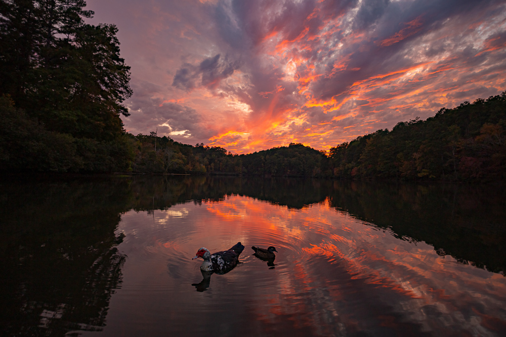 191104-pinks-over-tranquility-lake-oak-mountain-IMG_1091 S