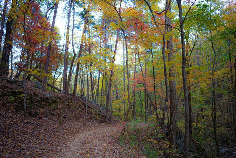 191111 oak mountain peak fall IMG_1775 S