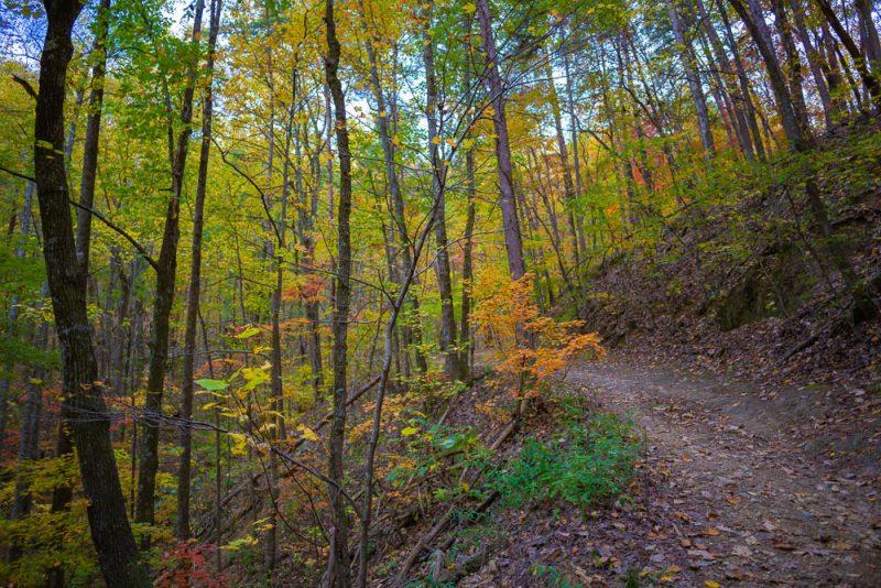 191111 oak mountain peak fall IMG_1810 S
