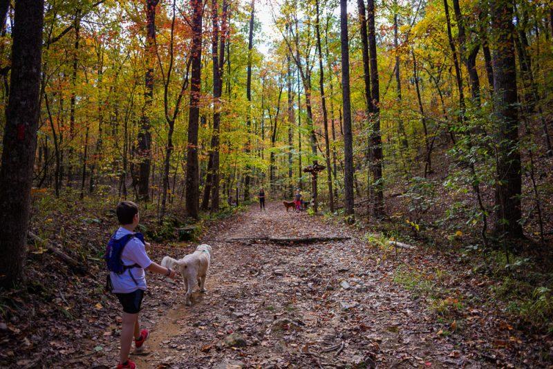 191111 oak mountain peak fall b IMG_1553 S