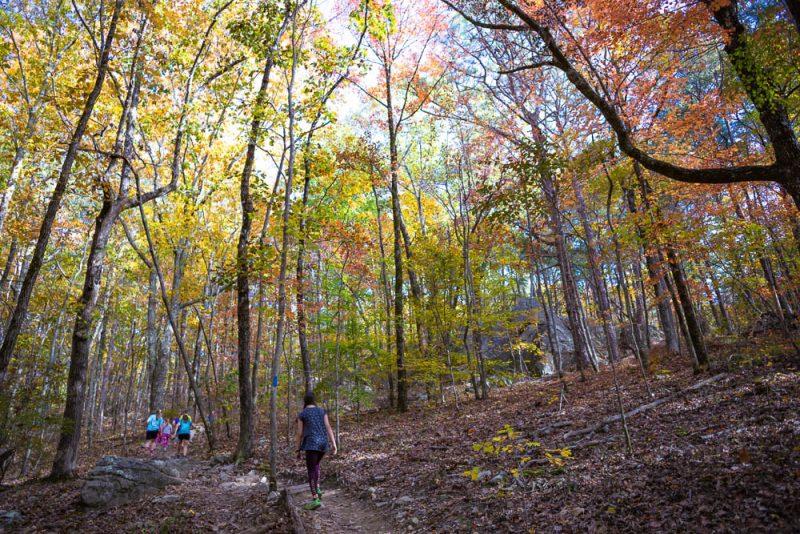 191111 oak mountain peak fall b IMG_1575 S