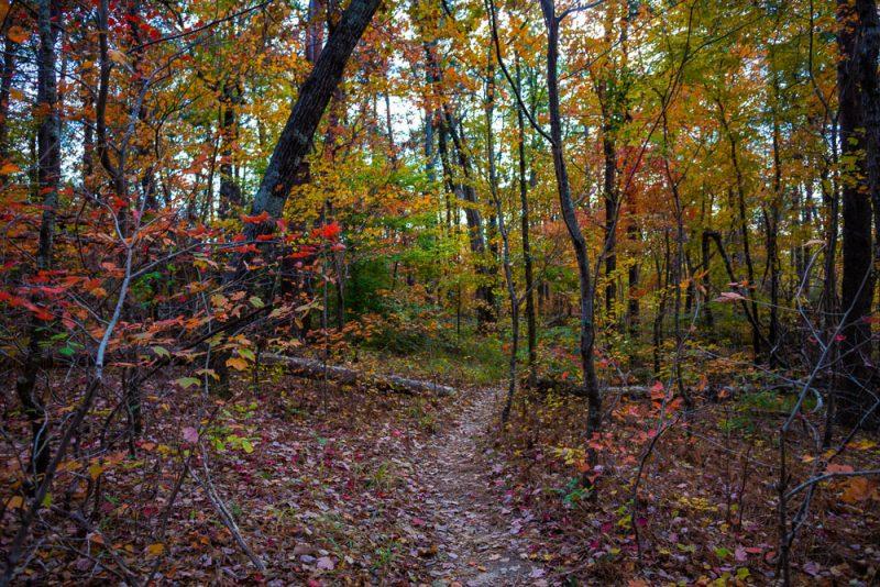 191111 oak mountain peak fall b IMG_1713 S