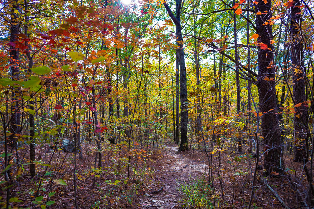 191111 oak mountain peak fall b IMG_1720 S