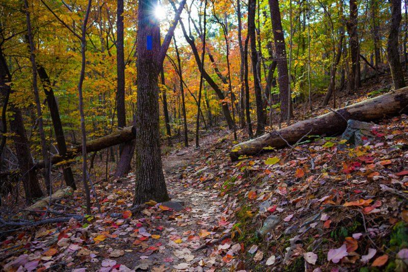 191111 oak mountain peak fall b IMG_1758 S