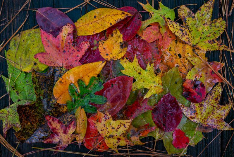 191115 tannehill leaves in the rain IMG_1984 S