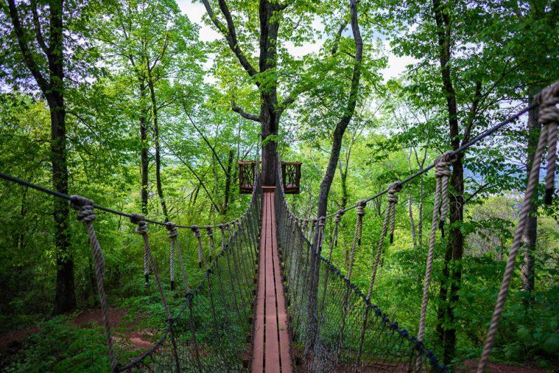 200406 red mountain park treehouse swinging bridge 2M7A7109 24 36 s