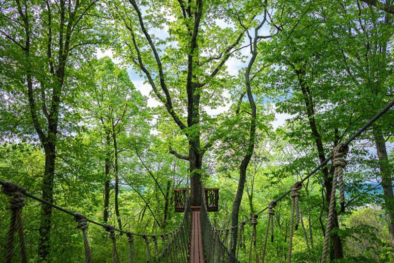 200406 red mountain park treehouse swinging bridge 2M7A7155 s