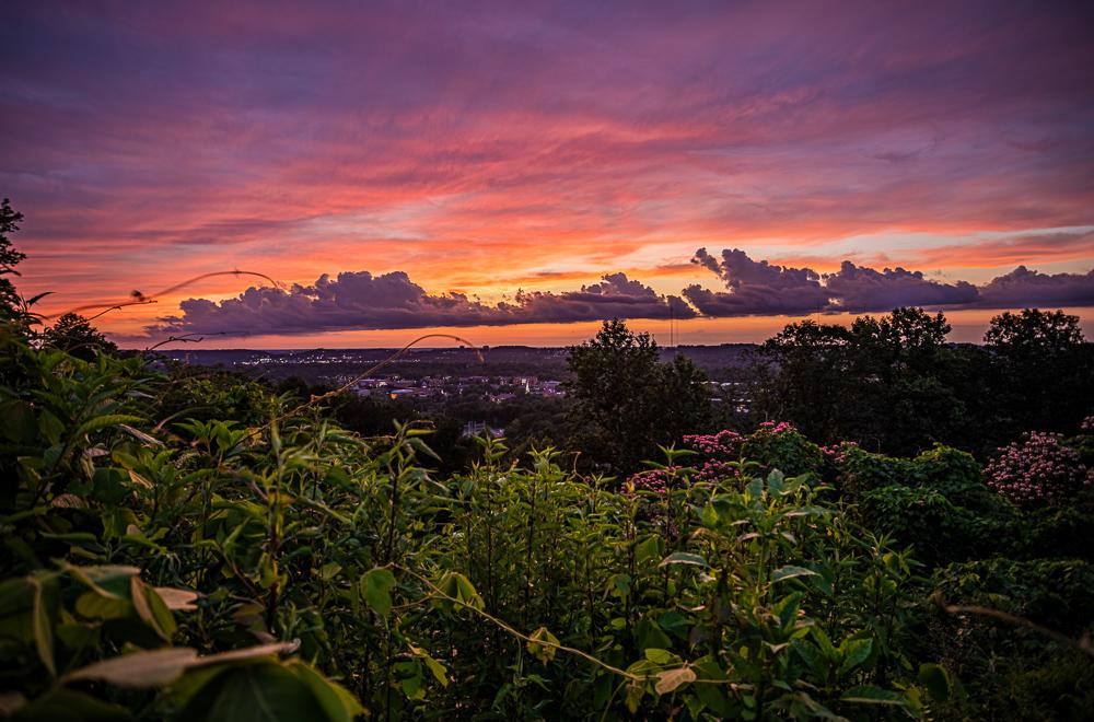 200606-Samford-Sunset-Through-the-Kudzu-and-Pink-Flowers-_M7A2338-H s