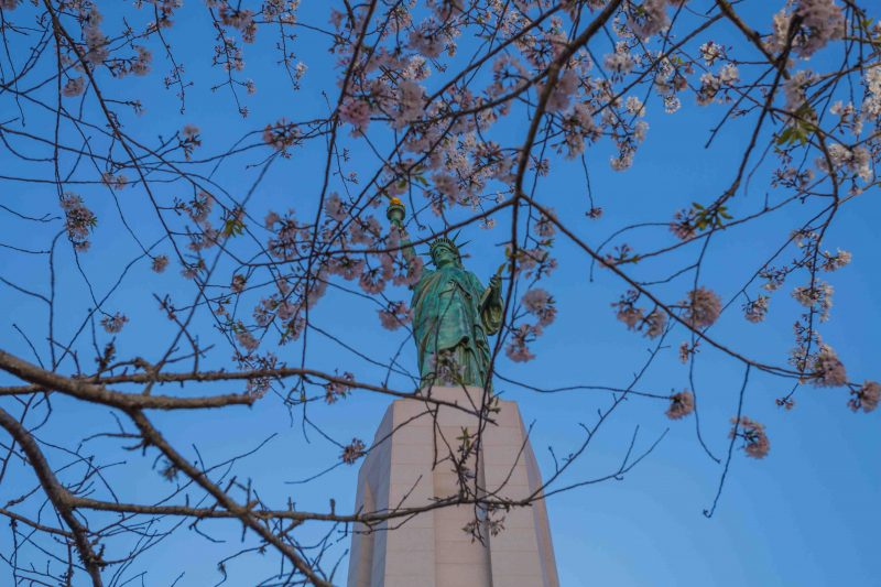 180315 Lady Liberty in Cherry Blossoms IMG_6637 web
