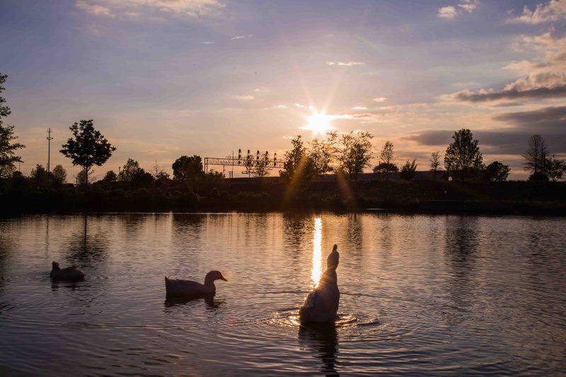 180423 Diva Ducks at Railroad Park IMG_1522 web