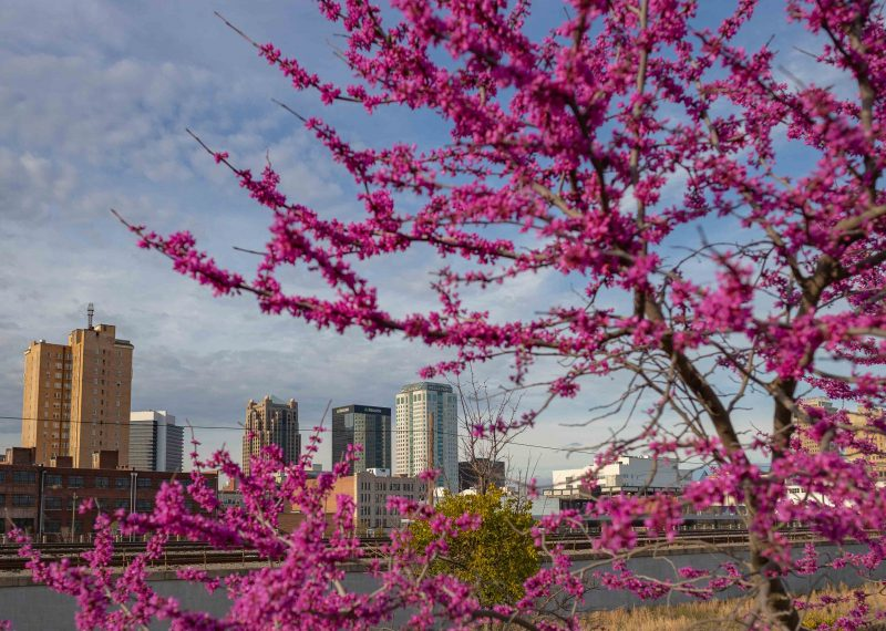 190312 Railroad Park Red Bud Trees and Sunset IMG_0553 web