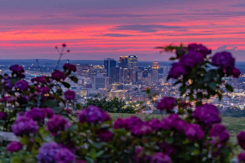 210604 crest road pink sunset through garden RZC_4717 r